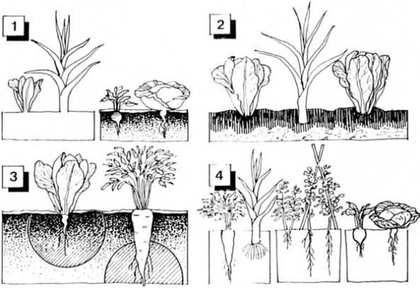 asociacion raices